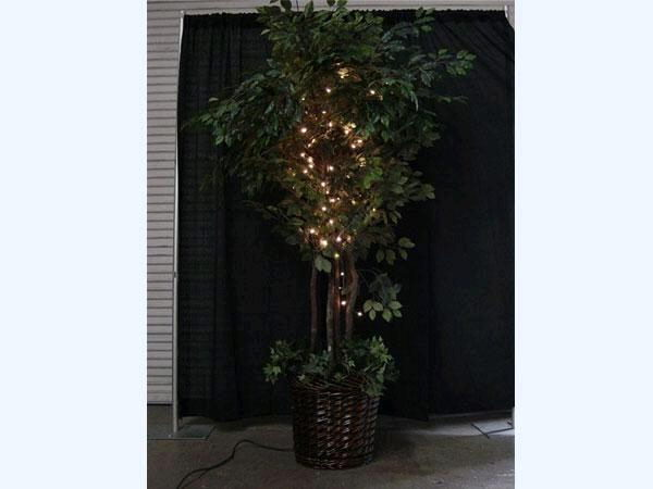 Where to find FICUS TREE W LIGHTS in Orange County
